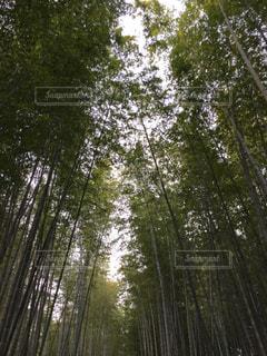 緑の写真・画像素材[688176]