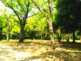 公園 - No.694116