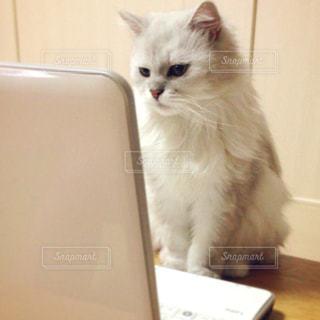 パソコンと猫の写真・画像素材[1047866]
