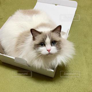 白い表面に横たわっている猫の写真・画像素材[2836554]