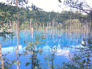 池の写真・画像素材[688938]