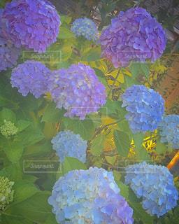 近くの花のアップの写真・画像素材[1275148]