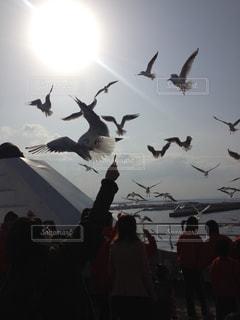鳥の写真・画像素材[703197]