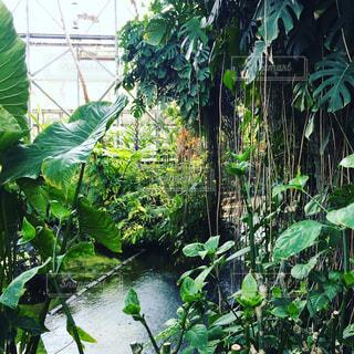 夢の島熱帯植物園の写真・画像素材[1022597]
