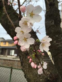春の写真・画像素材[689361]