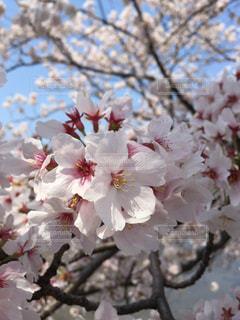 春 - No.689364