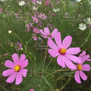 植物にピンクの花の写真・画像素材[756546]