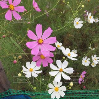 色とりどりの花のグループの写真・画像素材[756547]