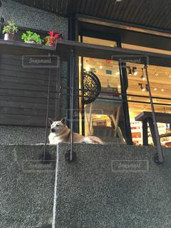 犬の写真・画像素材[689738]