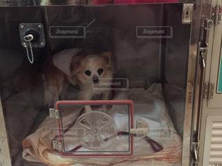 犬の写真・画像素材[689746]