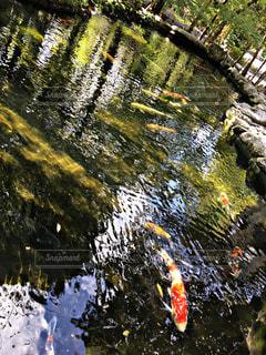 魚の写真・画像素材[689894]