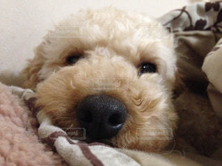 犬の写真・画像素材[689797]