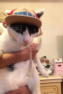 猫 - No.689971