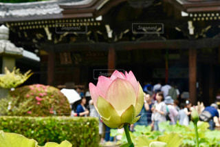 花の写真・画像素材[689981]