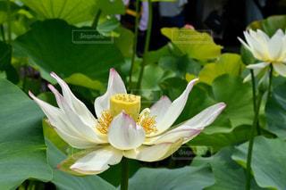 花の写真・画像素材[689982]