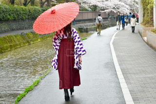 桜 - No.690012