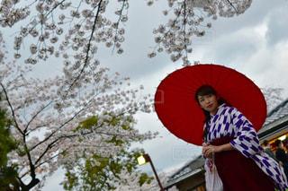 桜 - No.690015