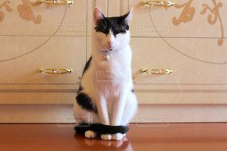 猫の写真・画像素材[690101]