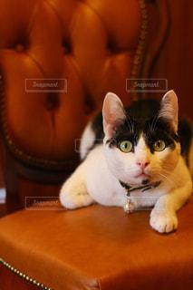 猫の写真・画像素材[690108]