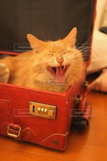 猫の写真・画像素材[690114]