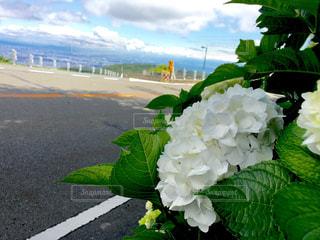 花の写真・画像素材[690121]
