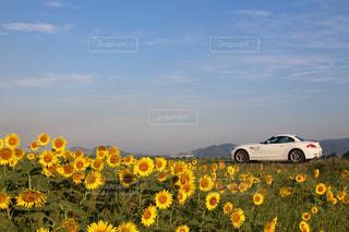 夏の写真・画像素材[698083]