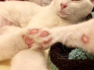 近くに眠っている猫のアップの写真・画像素材[851513]