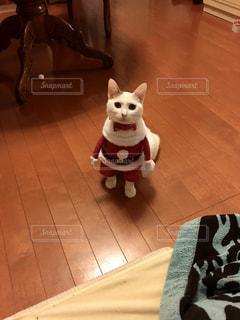 床に座って犬の写真・画像素材[852683]