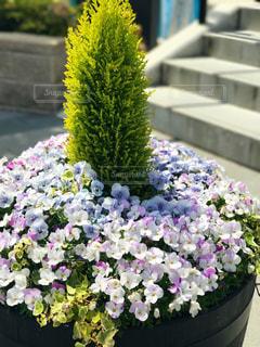 花の写真・画像素材[696033]