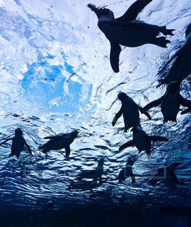 都会のペンギンの写真・画像素材[746396]