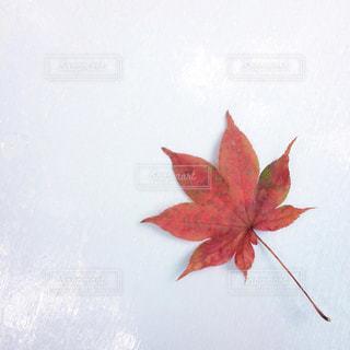 旅先で見つけた秋の写真・画像素材[782153]
