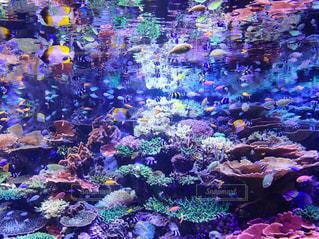 魚たちの楽園(水族館)の写真・画像素材[1016016]