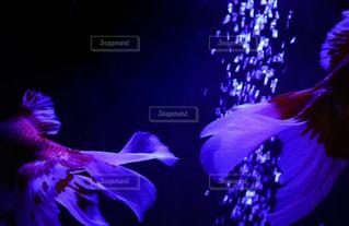 夏の夜のすれ違いの写真・画像素材[1370312]