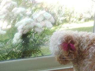犬の写真・画像素材[691169]