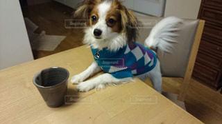 お茶を待つ犬の写真・画像素材[754447]
