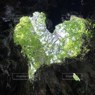 自然の写真・画像素材[693324]