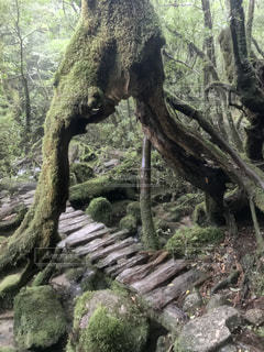 自然の写真・画像素材[693328]