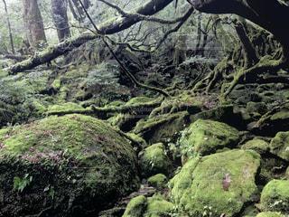 自然の写真・画像素材[693331]