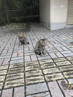 猫の写真・画像素材[693380]