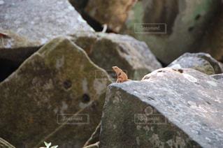 岩の上に座っているトカゲの写真・画像素材[2122861]