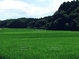 田園夏の写真・画像素材[691623]