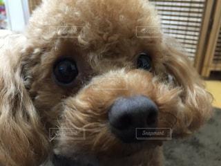 犬の写真・画像素材[691650]
