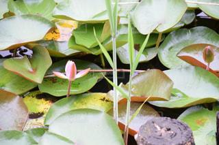 花の写真・画像素材[691659]