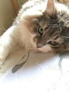 猫の写真・画像素材[691807]