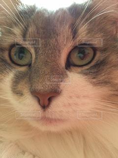 猫の写真・画像素材[692020]