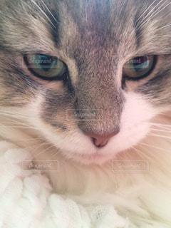 猫の写真・画像素材[692021]