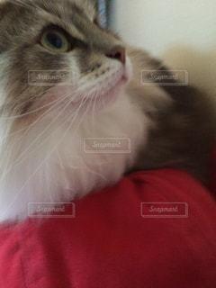 猫の写真・画像素材[696018]