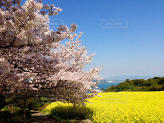 福岡の写真・画像素材[691912]