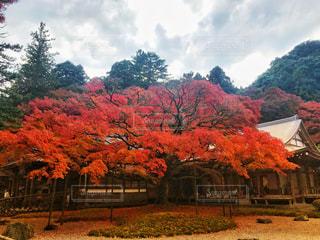 雷山の紅葉の写真・画像素材[880191]