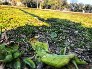 春はもうずっとの写真・画像素材[997829]